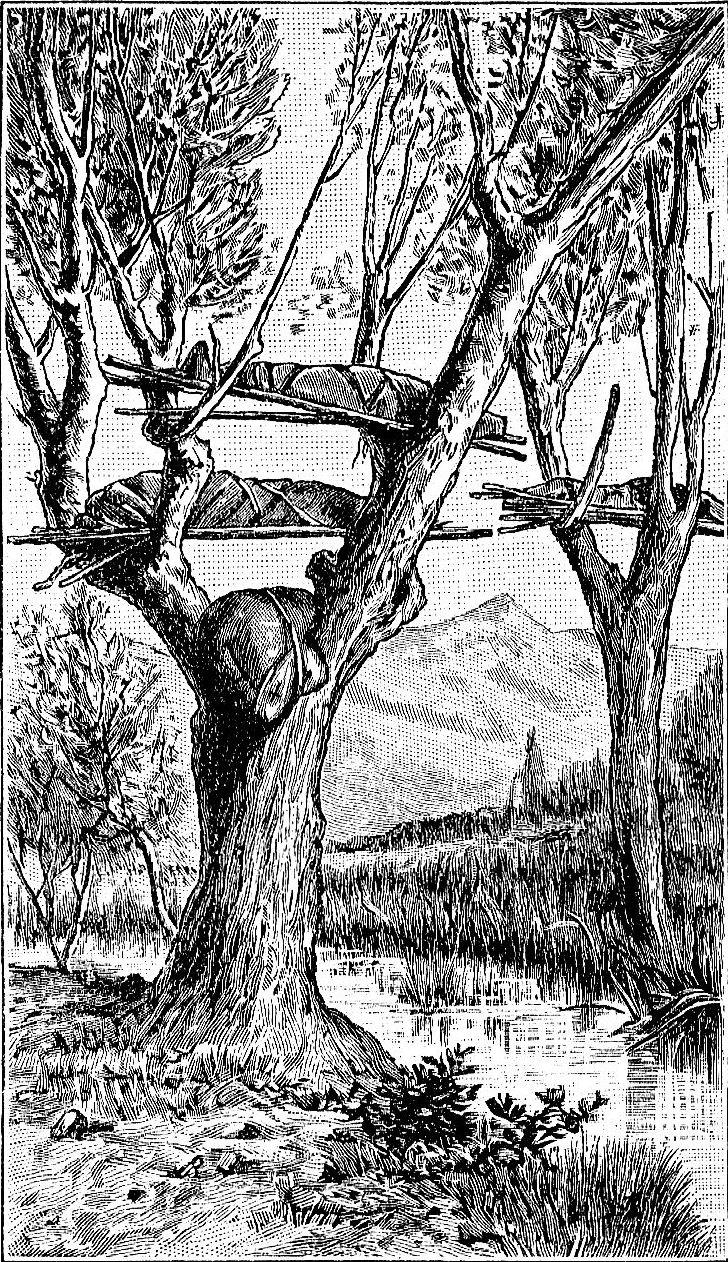 Baumbestattung Indianer Nebraska
